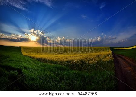 landscape with fields in summer at sunset, Dobrogea, Romania