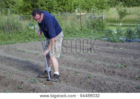 Farmer Weeding His Garden With A Hoe