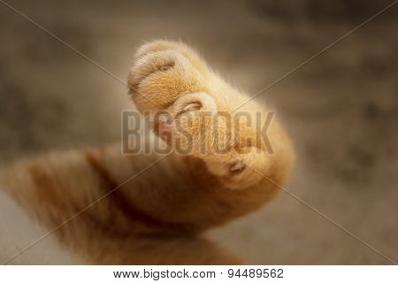 Cat's Paws.