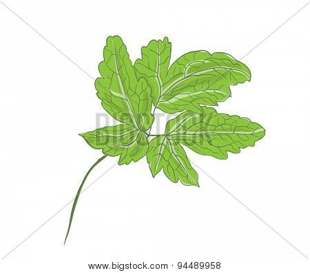green branch of a plant, vector leaves, isolated on white