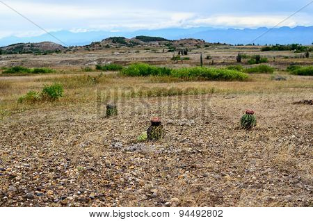 View To Tatacoa Desert With Few Greenery - Cactus And Bushes
