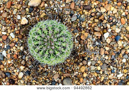 Aerial View Of Green Cactus In Desert