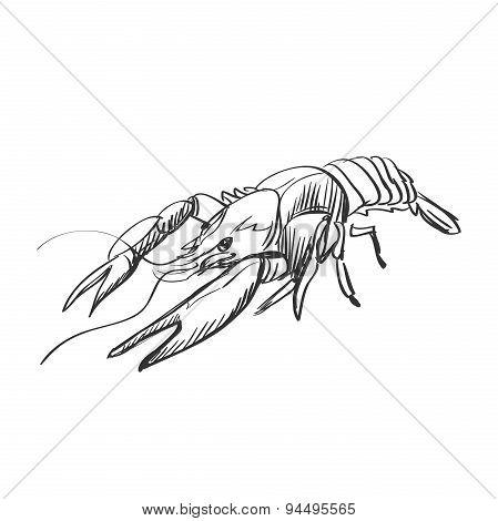doodle lobster