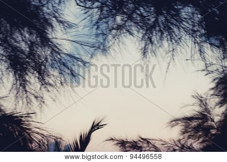Tall Coconut Palm Trees Against The Sky