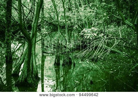 Wild Tropical Forest Landscape, Mangrove Trees, Green