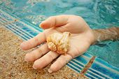 stock photo of conch  - Conch in hand of woman at swimming pool. ** Note: Visible grain at 100%, best at smaller sizes - JPG