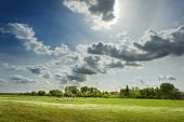 stock photo of pasture  - Flock of sheep carefree grazing on the idyllic pasture at sunny day - JPG
