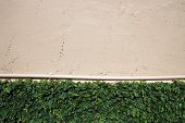 foto of rough-water  - green creeper on rough painted wall with water pipe background - JPG
