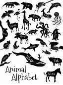 picture of animal silhouette  - Animal alphabet poster for children - JPG