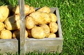 picture of wooden crate  - New potatoes in wooden crate over green grass background - JPG