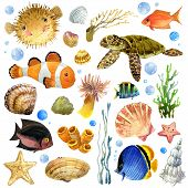 image of shell-fishes  - exotic Fish - JPG