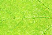 foto of fragmentation  - natural background  - JPG