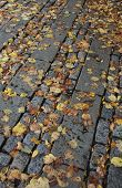 picture of cobblestone  - Golden leaves which have fallen onto a wet cobblestone path - JPG