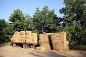 pic of threshing  - Straw  - JPG