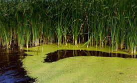 stock photo of algae  - Small forest water algae pond in the shady late summer forest under the trees - JPG