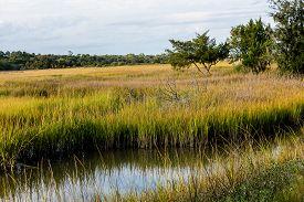 pic of marshes  - Brilliant Green Wetland Marsh Grass Growing Under Blue October Skies - JPG