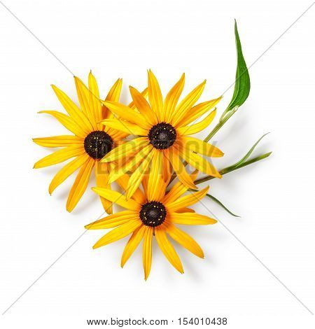 Sunflower with leaf. Helianthus perennial plant. Objects group isolated on white background with clipping path.Summer garden flowers. Top view flat lay