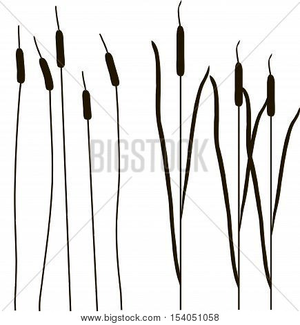 Black outlines of cattail, object isolated vector illustration, brushes