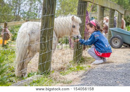 Little kid feeding pony horse on an animal farm. Cute young girl feeding pony horse in farm. Active leisure with children outdoors. Child feeds pony horse at pet zoo.
