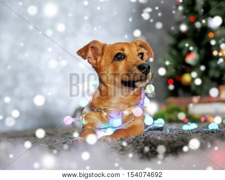 Cute puppy with garland lying on carpet against blurred Christmas tree background. Snowy effect, Christmas celebration concept.