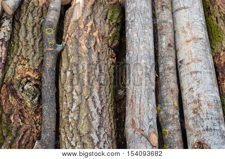 Environment, Nature And Deforestation Forest - Felling Of Trees. The Concept Of A Global Problem. Ba