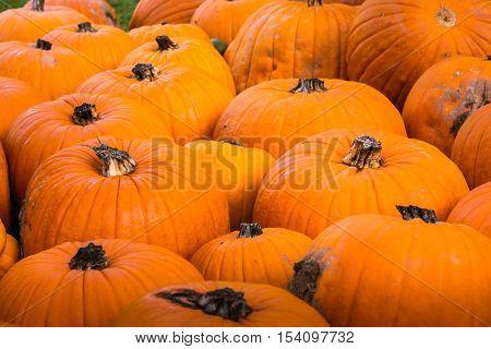 Group Pumpkin Closeup Texture Field Many Colorful Orange White Green Dark Red Sizes Varying Field Ga