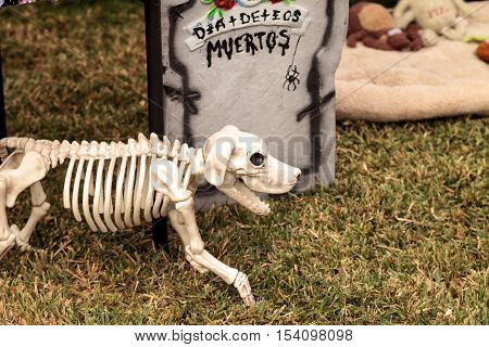 Flower and skeleton dog, cat and bird alter at Dia de los Muertos, Day of the dead