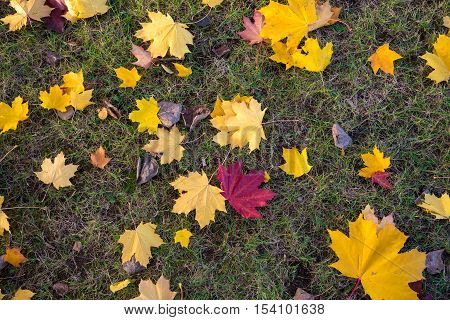 Natural background made of grass and colorful autumn leaves