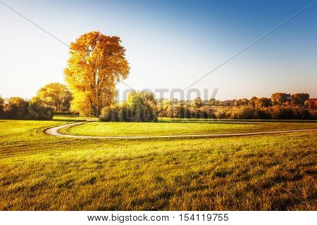 Big linden tree with gold leaves walking path and grass. Autumn landscape. Beauty in nature