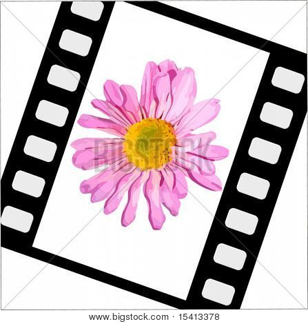Vector Film With Flower