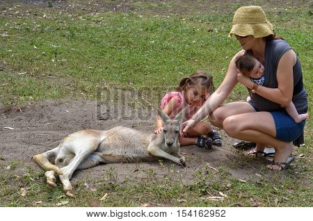Young mother with her little girl (age 04) and infant baby petting an Eastern grey kangaroo female in Gold Coast Queensland Australia