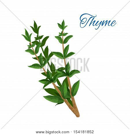 Thyme branch with leaves. Vector isolated icon of aromatic spice herb. Emblem of green thyme leaf for culinary condiment, cooking ingredient, package sticker, label design element