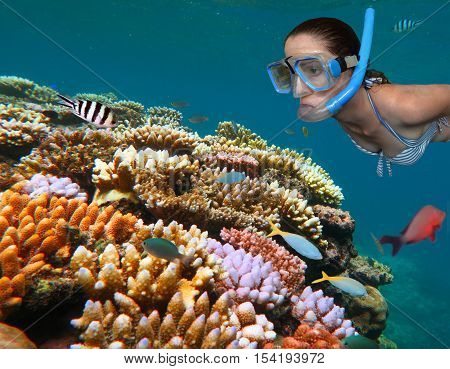 Young Woman Snorkeling In The Great Barrier Reef  Queensland Australia