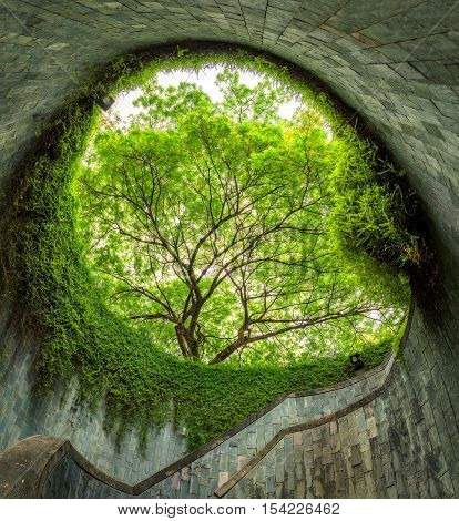 The tree over tunnel walkway at Fort Canning Park and Penang road. Singapore
