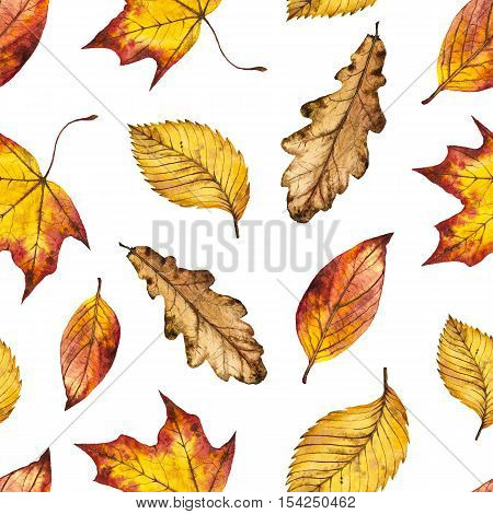 Seamless watercolor autumn pattern of leaves oak, maple, elm, watercolour background of yellow, orange and red leaf, hand painted botanical illustration for textile, wrapping paper, card, invitation
