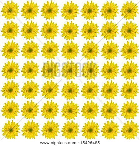 Yellow Real Daisy Close Up Seamless Pattern Background