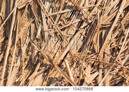 Reed Thatch Detail, Hay Straw Stack Background Texture