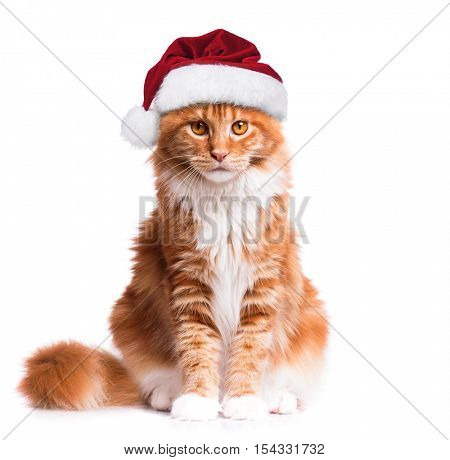 Portrait of Maine Coon kitten in red Christmas Santa hat. Funny cute orange striped cat dressed as Santa Claus looking at camera. Christmas kitty isolated on white background.