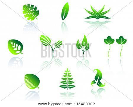 Set of leaves icons. Jpeg version also available