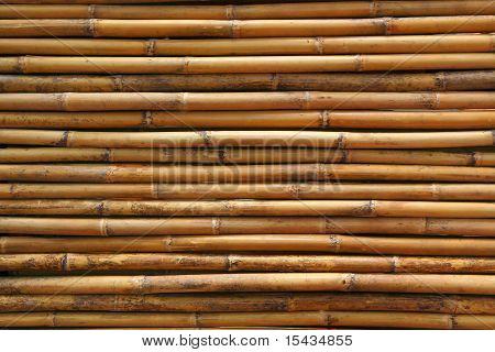 Tropical bamboo wall