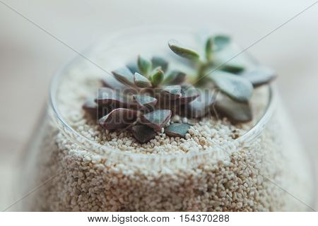 Decorative glass vase with white sand and succulents on a white table