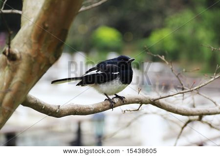 sparrow perched on branch