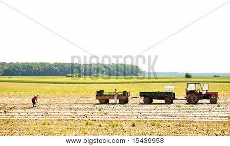 Working on field