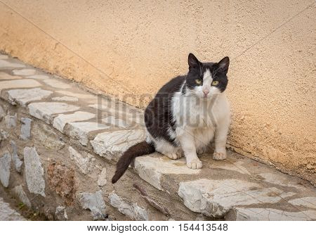 Black and white stray fatty cat sitting by the wall and looking us