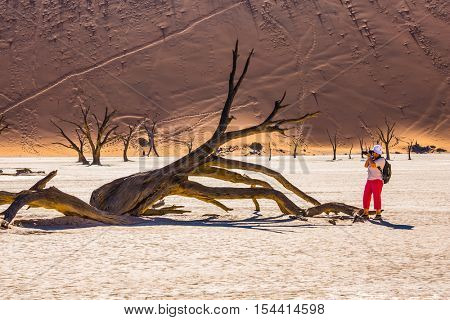 Travel to Namibia. Elderly woman photographing picturesque dried tree. The dried-up lake surrounded by orange dunes