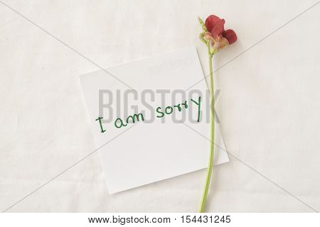 i am sorry feeling message card and red little flower