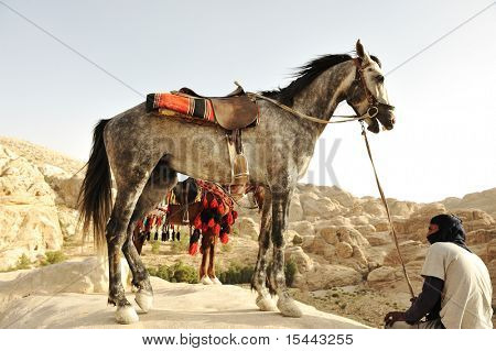 Man and horses in nature