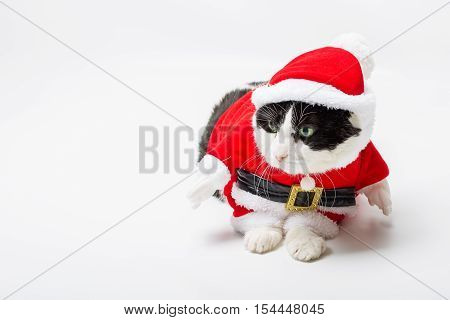 funny cat with Santa Claus hat on studio white background and copy space. Christmas holiday concept for greeting card.