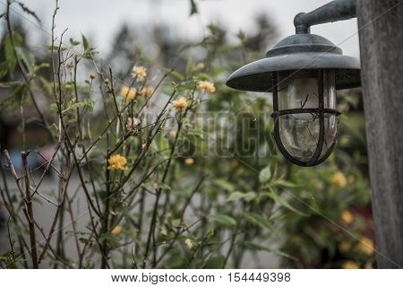 Dark haunted scene with lantern and green plants and yellow flowers