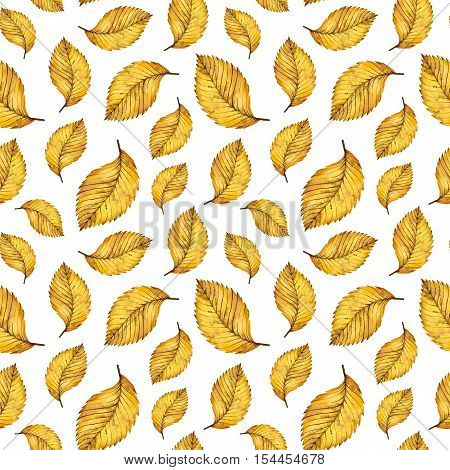 Watercolor seamless pattern autumn yellow leaves of elm, hand paint watercolour autumn background of falling leaf